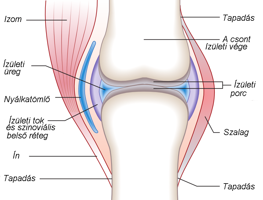 Jó kenőcső a nyaki gerinc csontritkulásához - A nyaki gerinc csontritkulásának kezelése